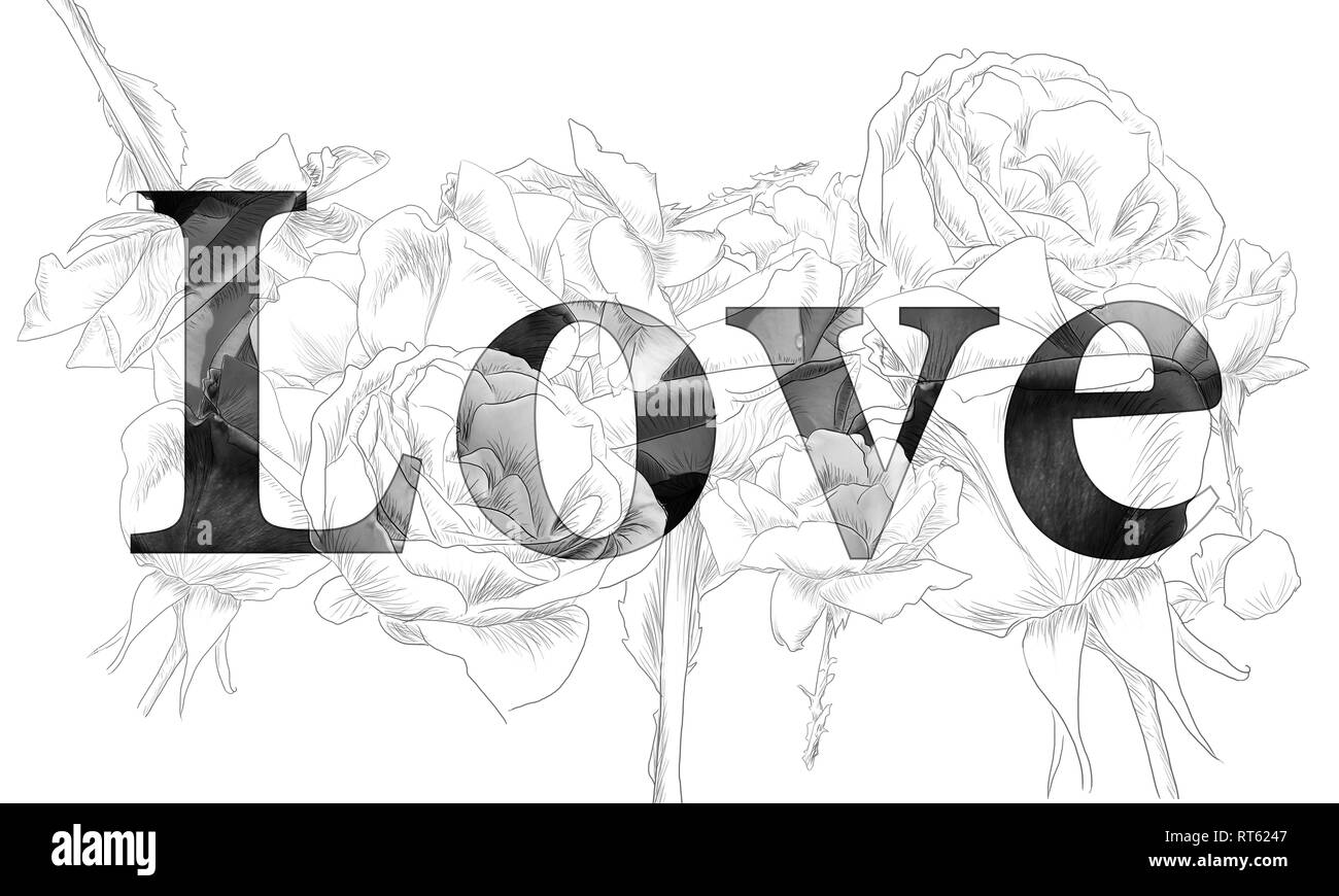 Monochrome sketch roses word love white background by
