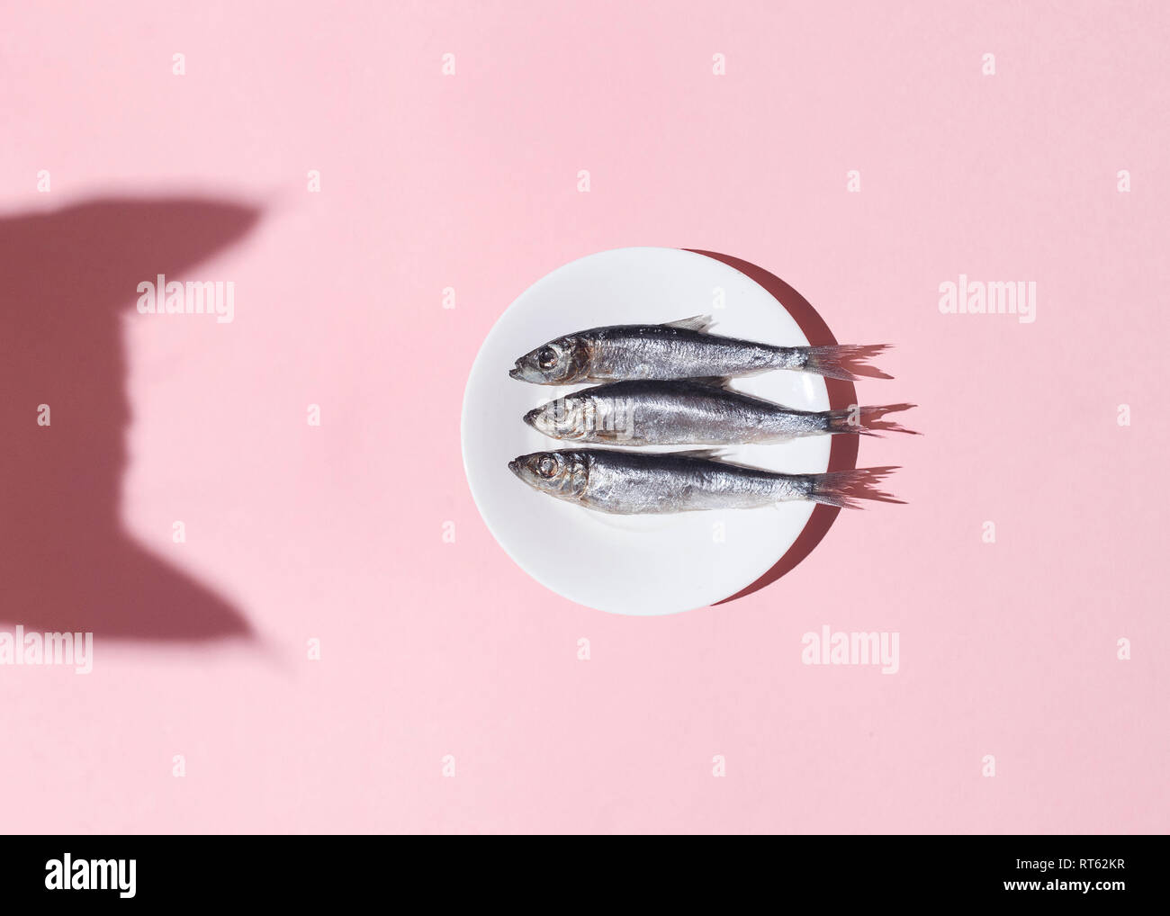 Cat vs fish. Curious cat shadow and plate with silver fish on pink background. Hard light. Top view. Flat lay. Curiousity and food concept. - Stock Image