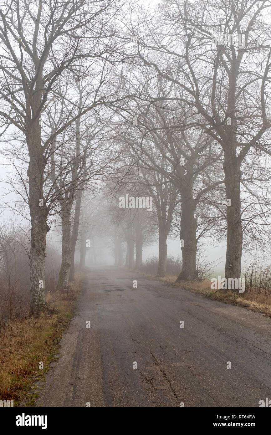 Asphalt road in a big fog. Low visibility on a busy road in Central Europe. Season of the spring. Stock Photo