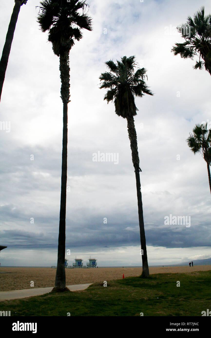 Palm trees in Venice beach, Los Angeles Stock Photo