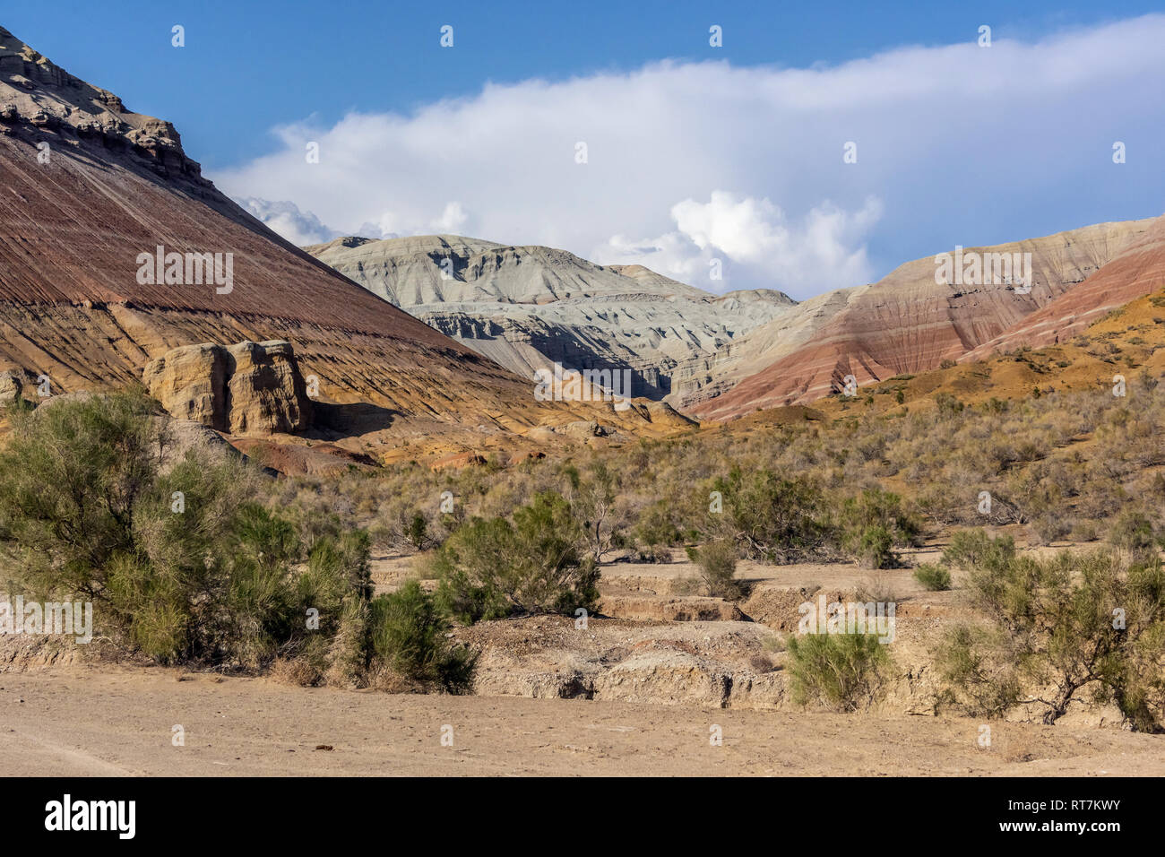 Valley with colourful clays and saxaul trees, Aktau Mountains, Altyn Emel National Park, Kazakhstan - Stock Image