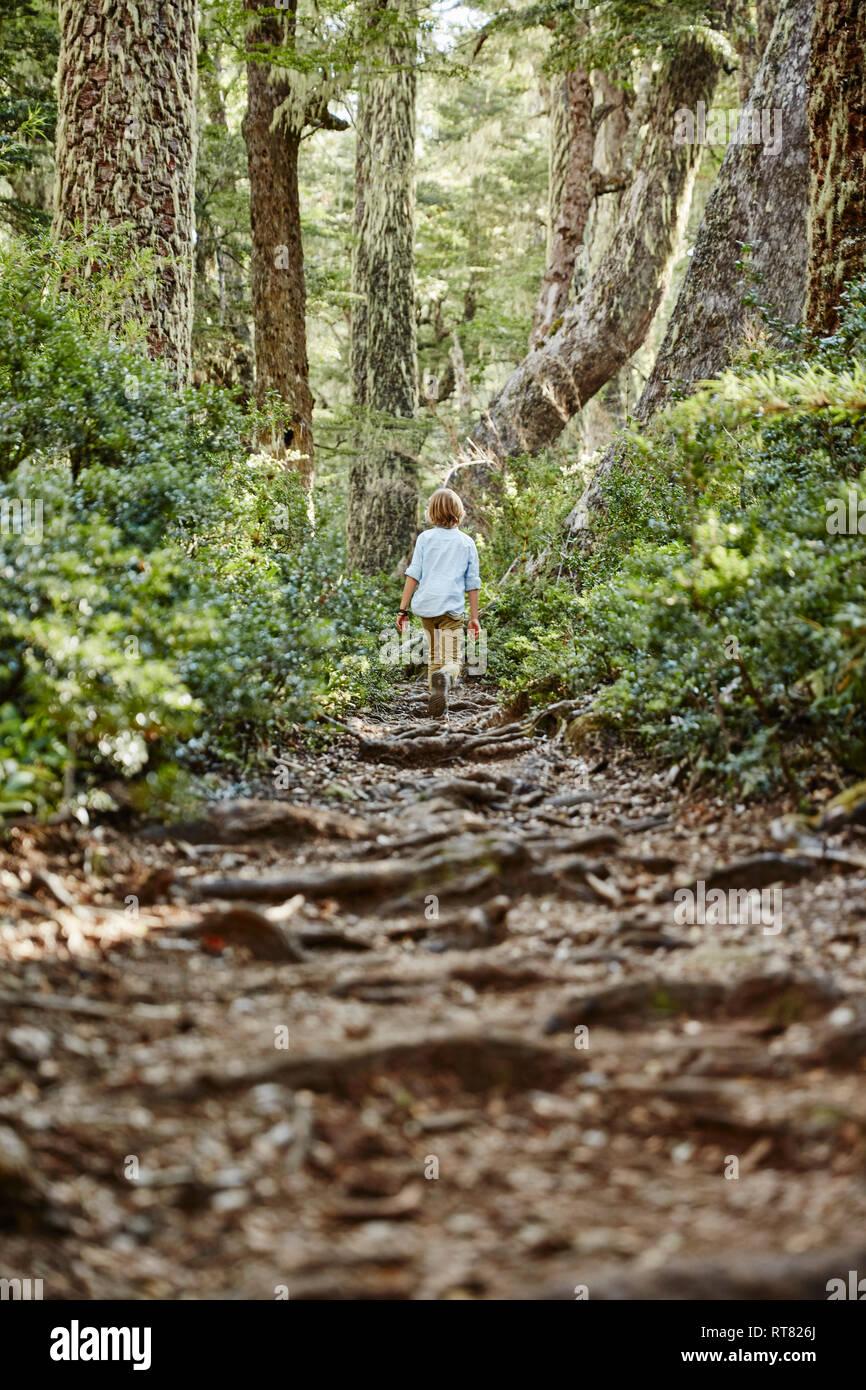 Chile, Puren, Nahuelbuta National Park, boy walking on path through forest - Stock Image