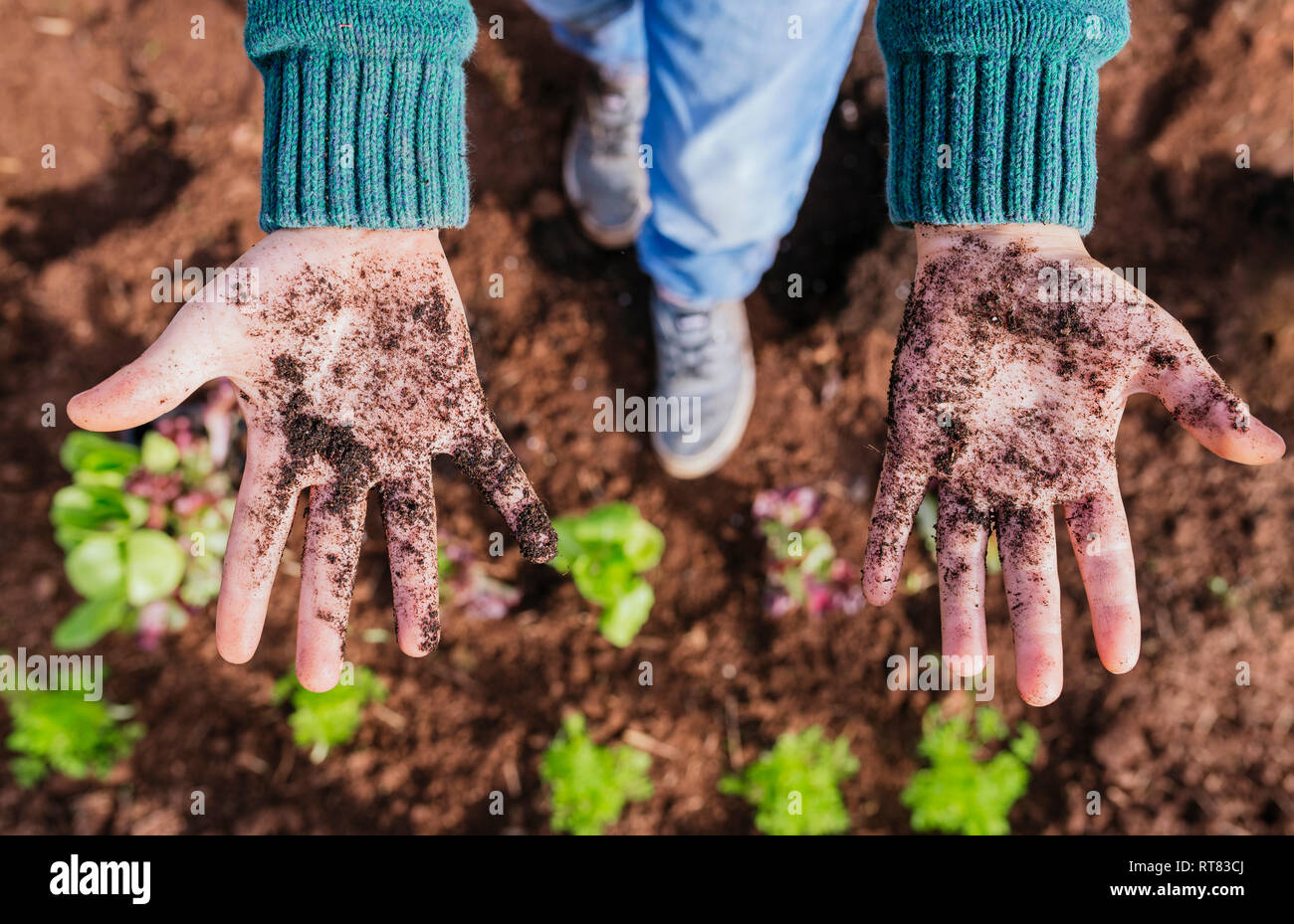 Boy showing messy hands, full of soil, after planting seedlings - Stock Image