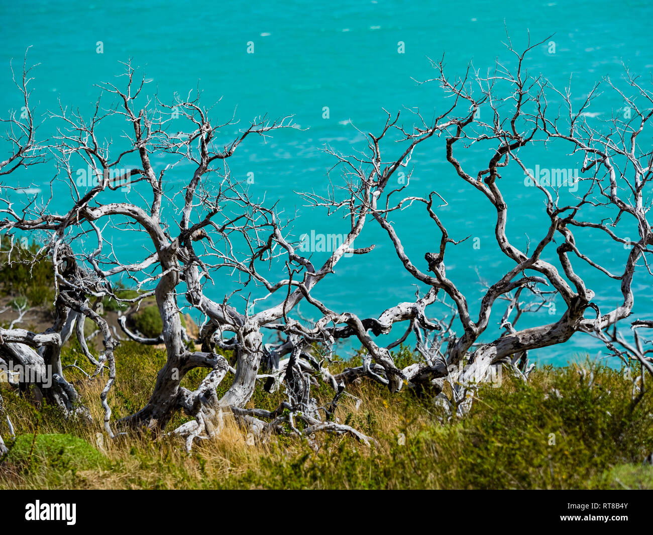 Chile, Patagonia, Torres del Paine National Park, Lago Nordenskjold and dead trees in the foreground - Stock Image