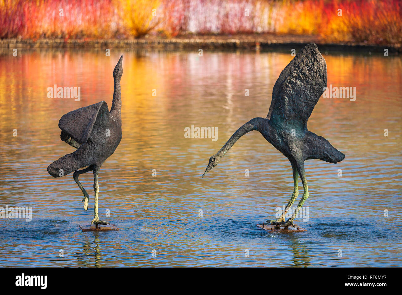 Courting Cranes by Gail Runyon Perry at Wisley RHS Gardens, illuminated by colourful Dogwood. - Stock Image