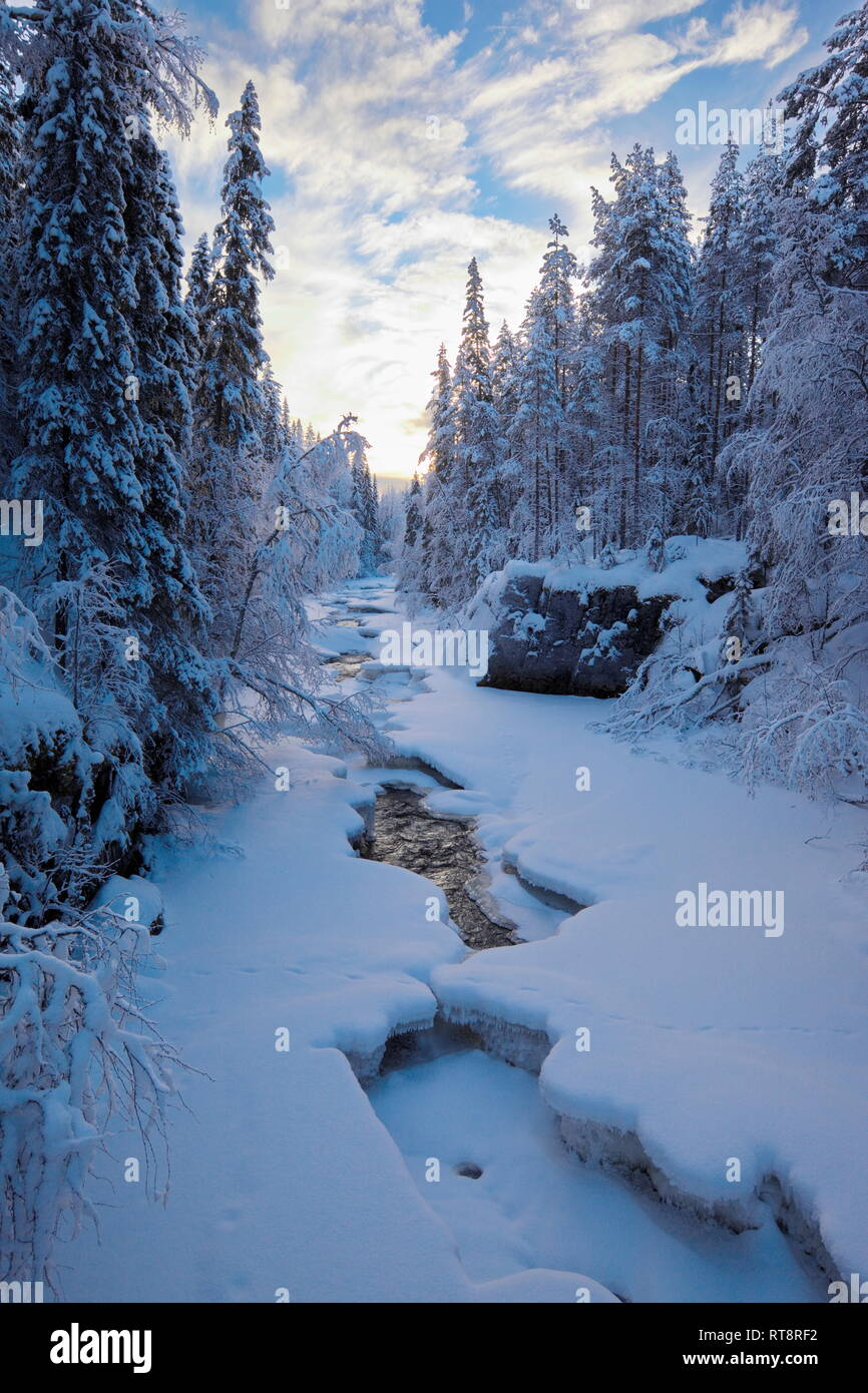 A natural river is flowing through a snow covered forest on a cold winter day in northern Sweden. Stock Photo