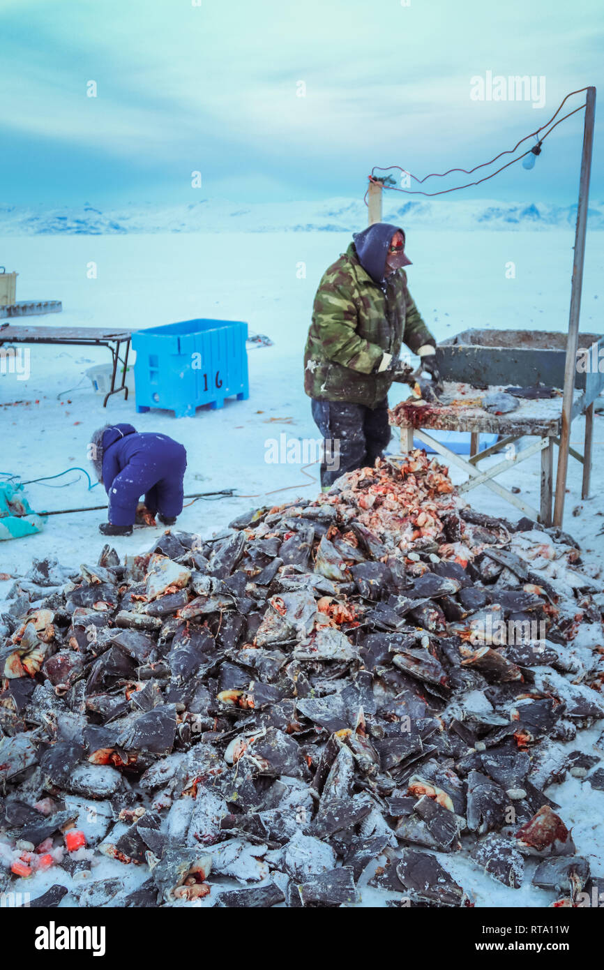 Fish scraps from the seasons turbot catch Stock Photo