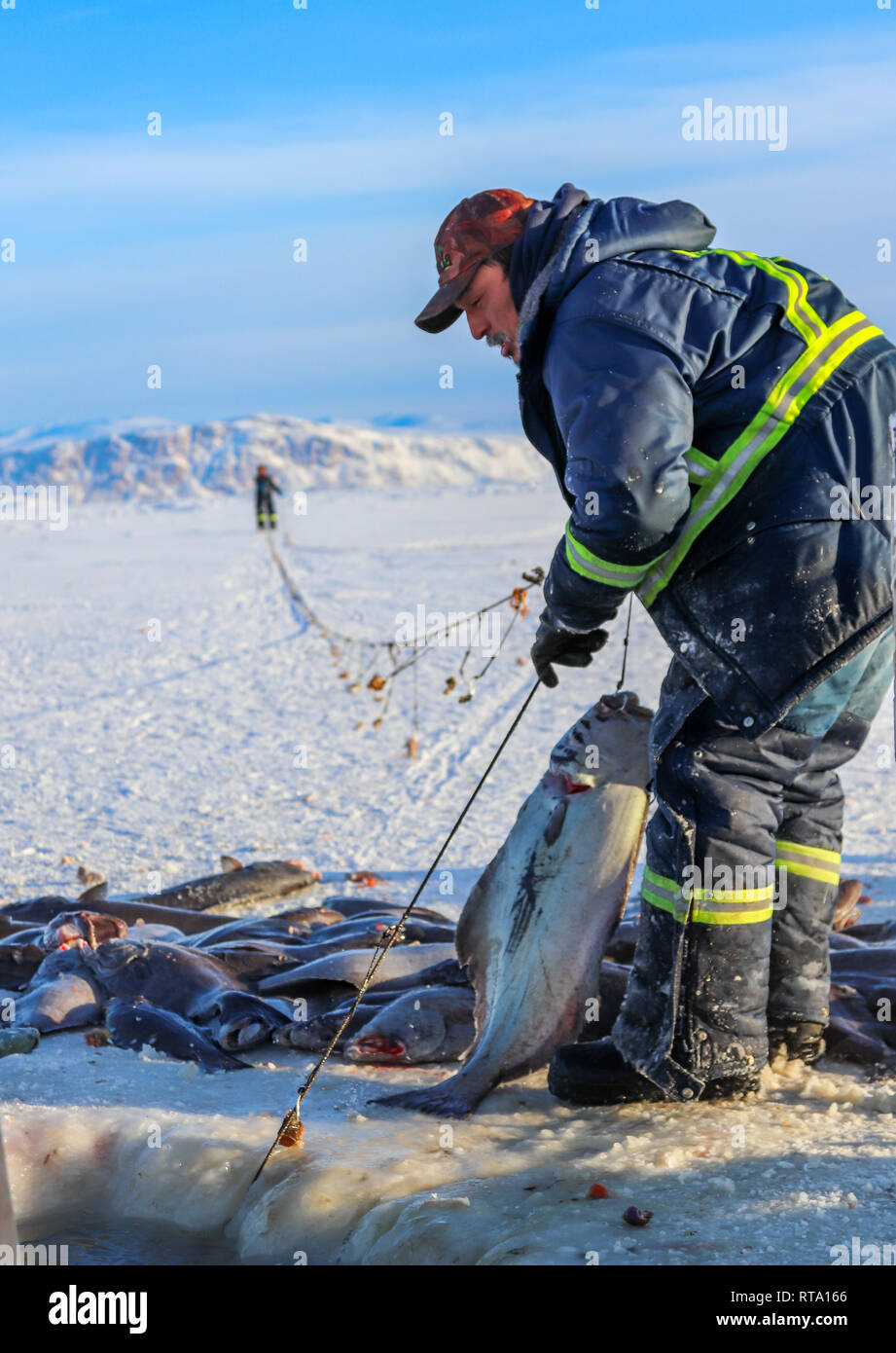 Inuit man bringing in the fishing lines Stock Photo