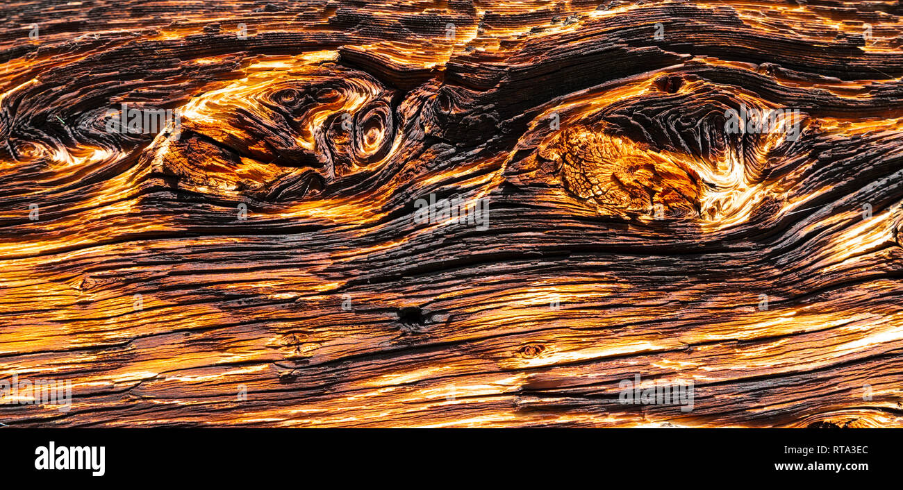 Close-up of an old, strongly textured wooden plank with warped structure, burnt surface and knotholes - Stock Image
