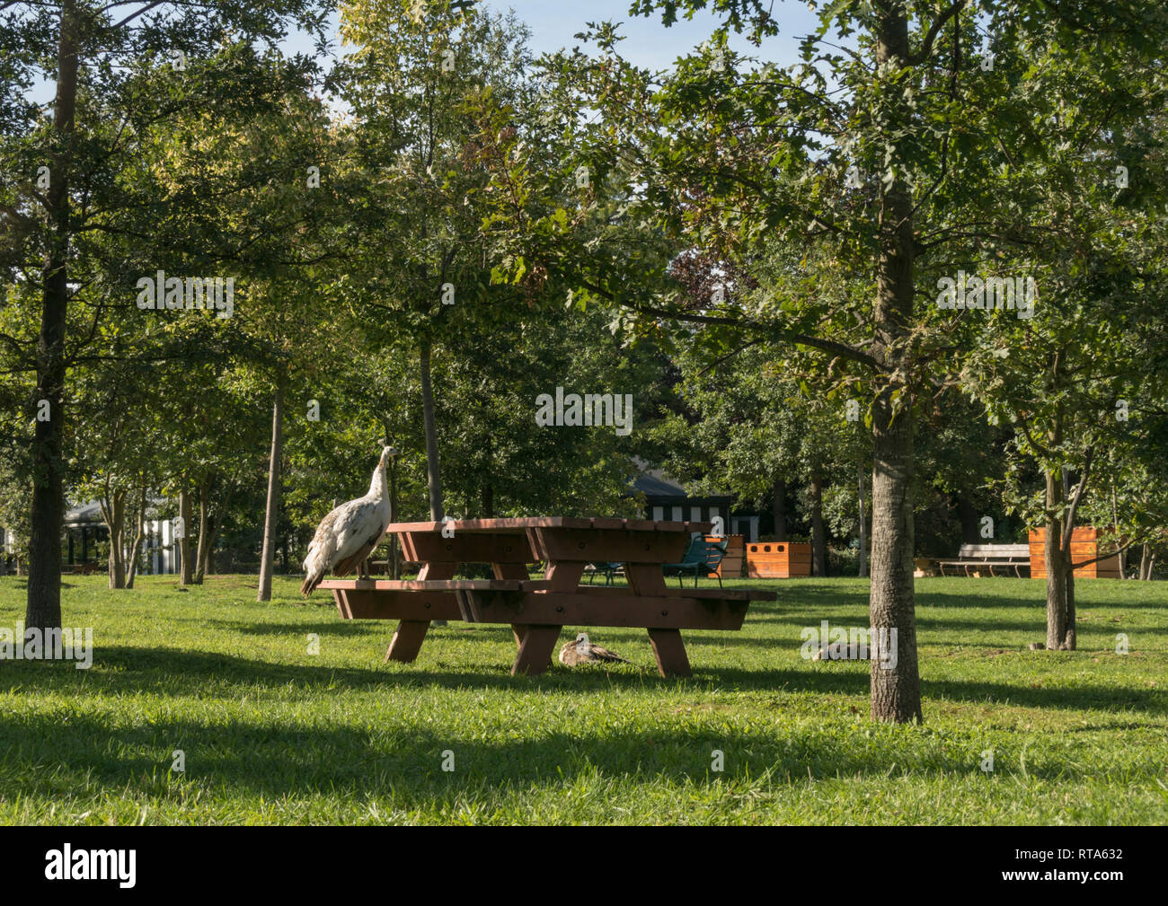 Jardin D Acclimatation High Resolution Stock Photography And Images Alamy