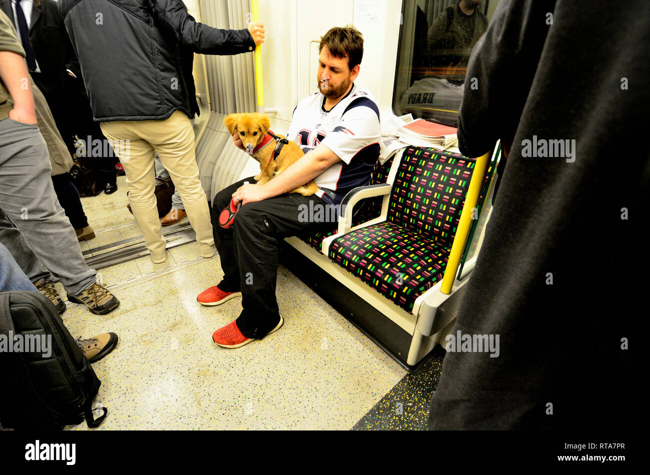 London, England, UK. Man with a small dog on a tube train, London Underground - Stock Image
