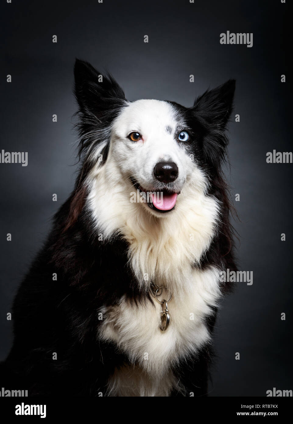 Funny dog with different eyes - Stock Image