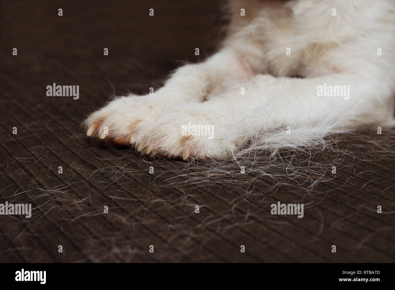 Hair On Claws Stock Photos Amp Hair On Claws Stock Images