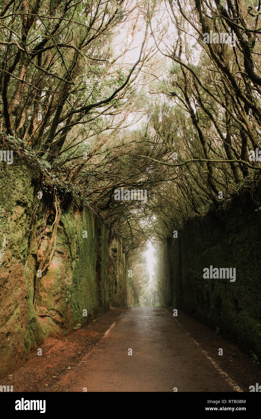Footpath between murk alley of high walls and woods - Stock Image