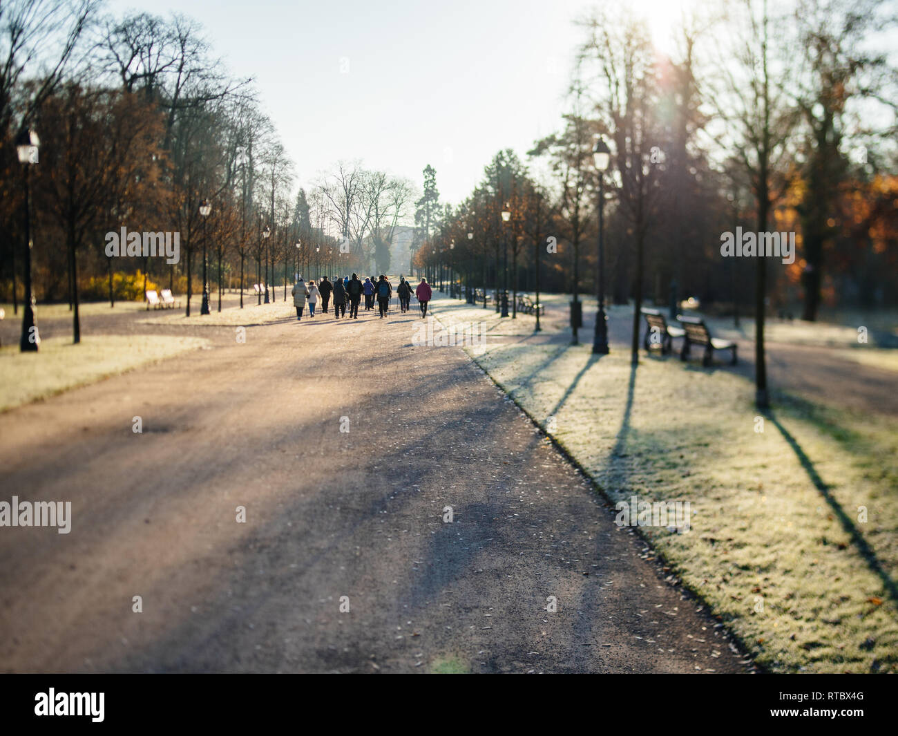 Rear view of unrecognizable group of seniors friends workout in public Orangerie park with hiking trekking alpine poles for a healthy spirit - tilt-shift lens used  - Stock Image