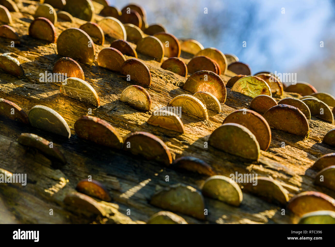 Hammering coins into a tree trunks is a centuires old tradition that for some is said to bring good fortune and or others is to cure ailments of vario - Stock Image