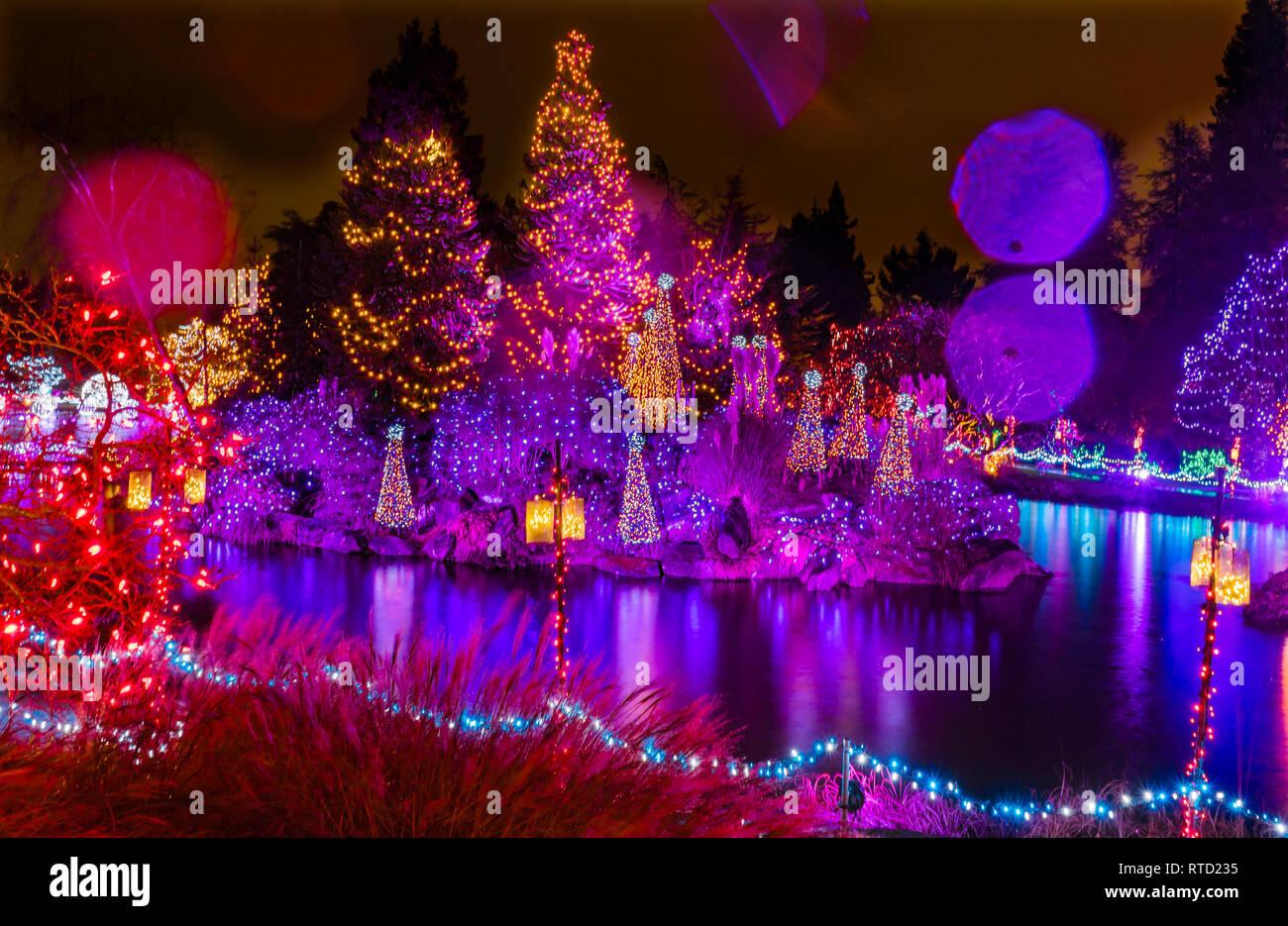 Pink Purple Blue Christmas Trees Lights Reflection Lake Van Dusen