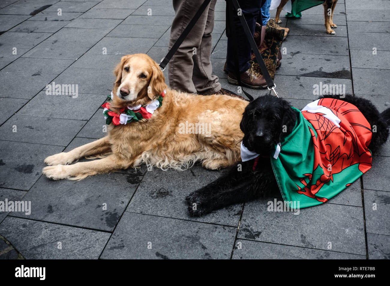 Cardiff, Wales, UK. 1st March 2019. Celebrations for St Davids Day in cardiff city centre, March 1st 2019, Cardiff, UK Credit: Shaun Jones/Alamy Live News - Stock Image
