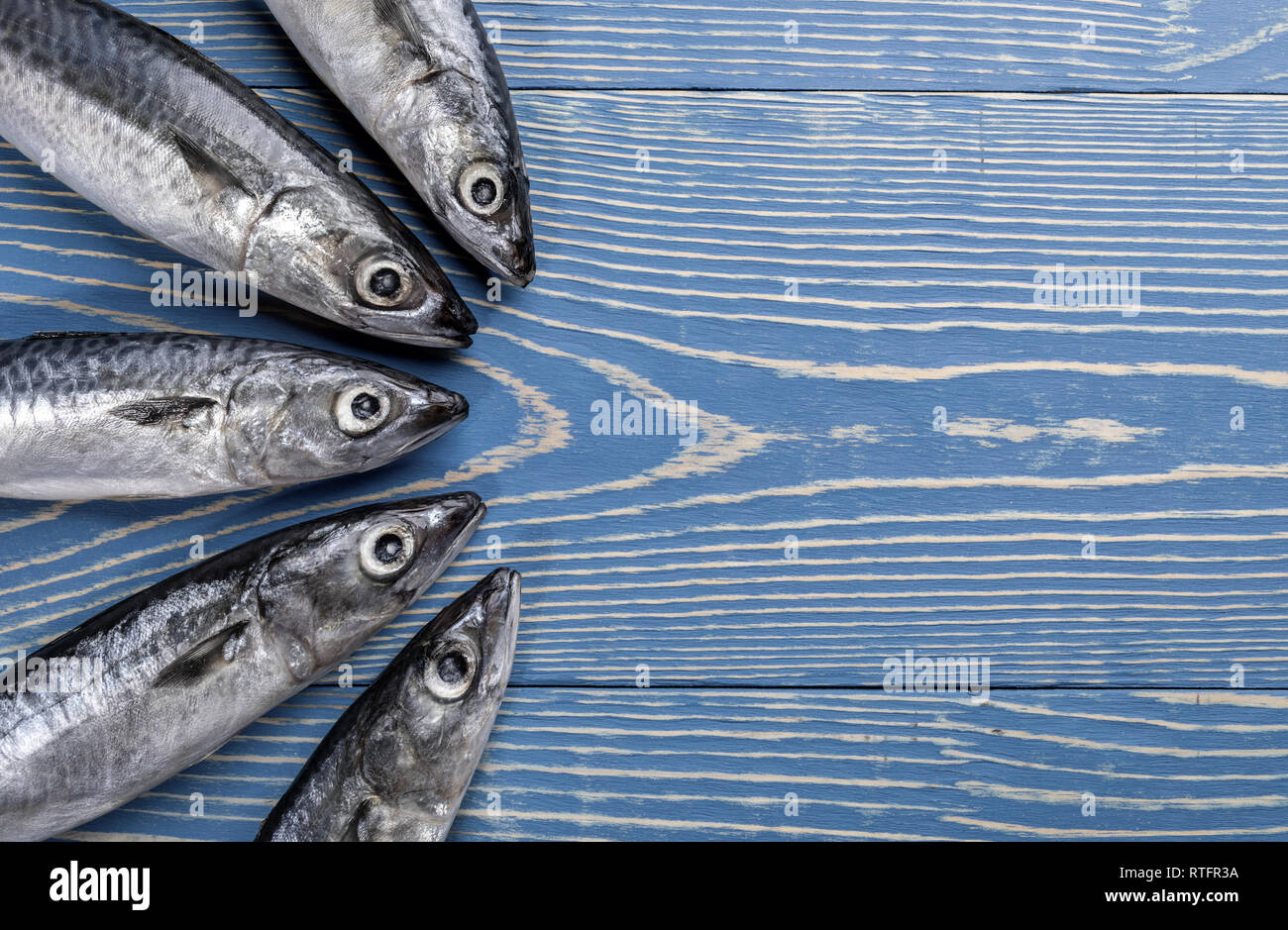 Five mackerel fishes laid out on painted blue wooden background.  Decolored image. - Stock Image