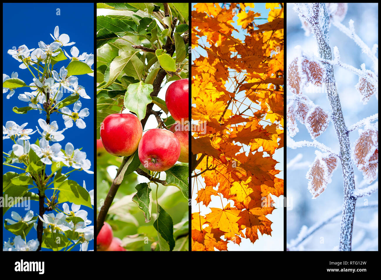 Collage of four pictures representing each season: spring, summer, autumn and winter. - Stock Image