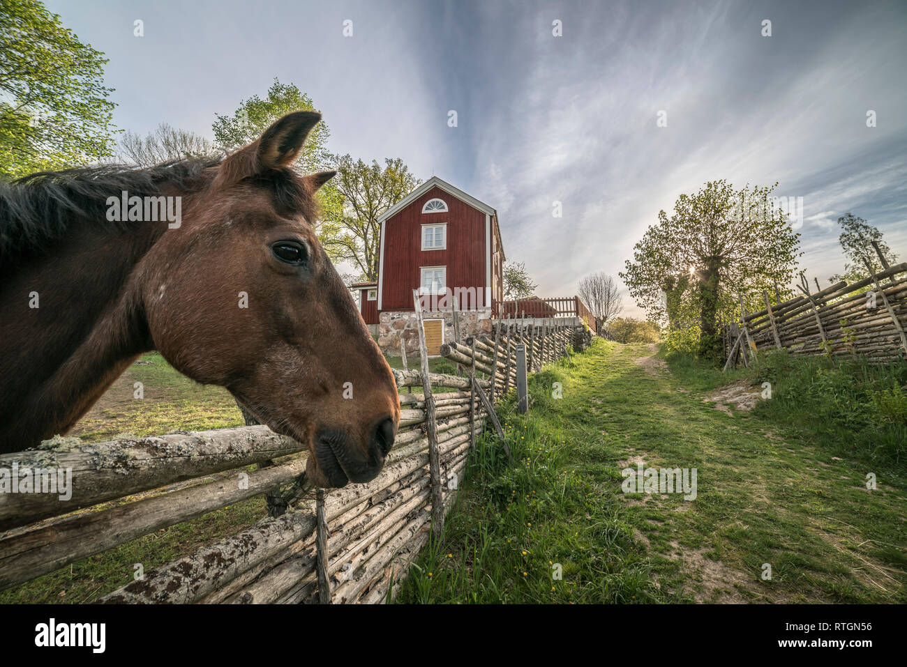Horse and traditional roundpole fence and an old farm house at the village Stensjo by in Smaland, Sweden, Scandinavia - Stock Image
