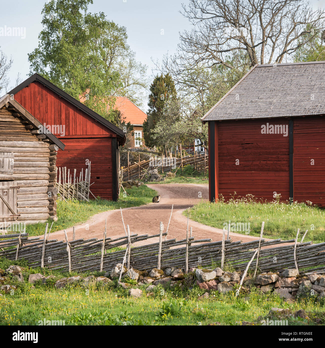 Cat on country road at an old farm house and traditional roundpole fence in  the rural  village of Stensjo in Smaland, Sweden, Scandinavia - Stock Image