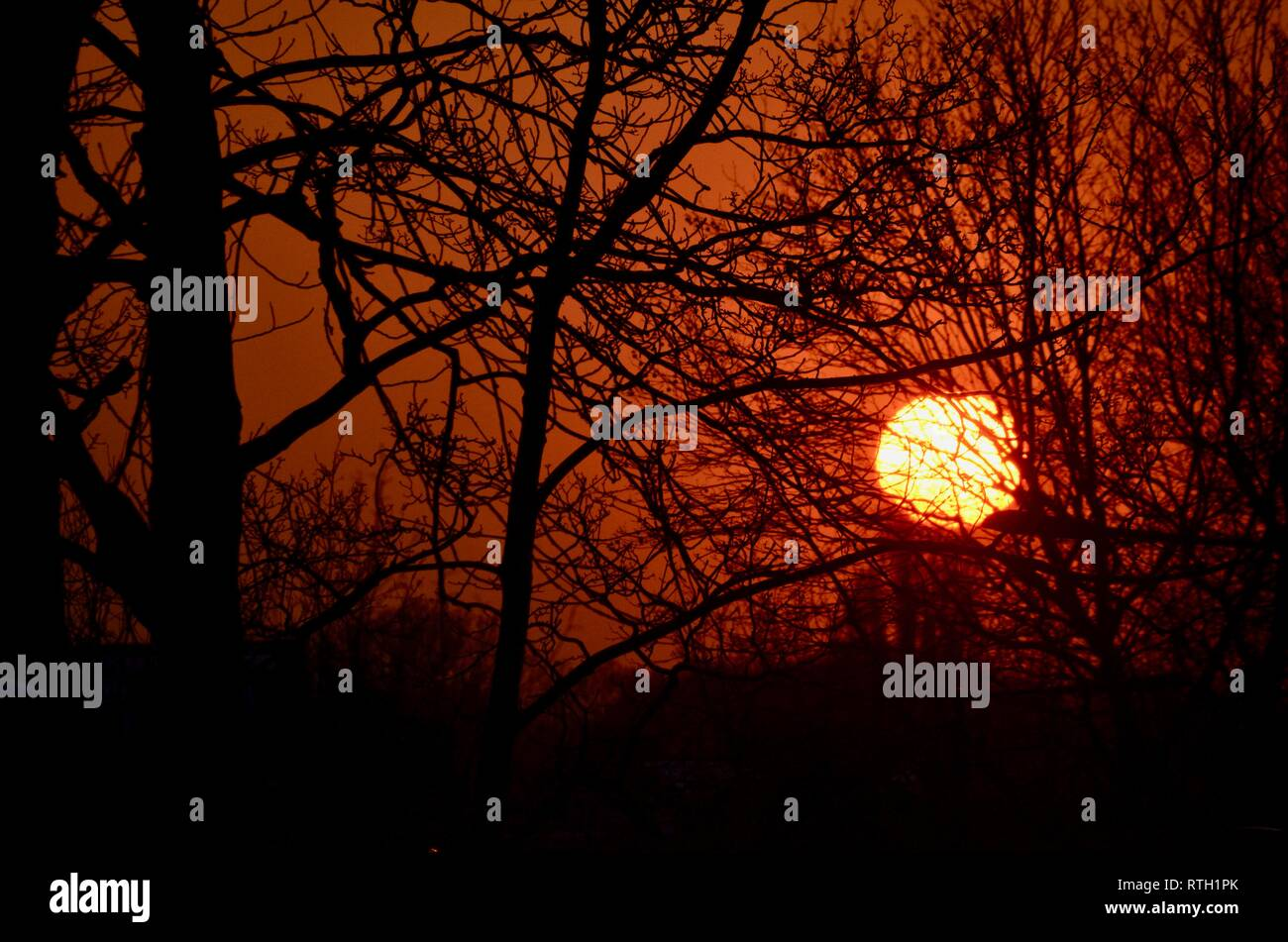 the sun setting through trees with an orange sky in london england UK - Stock Image