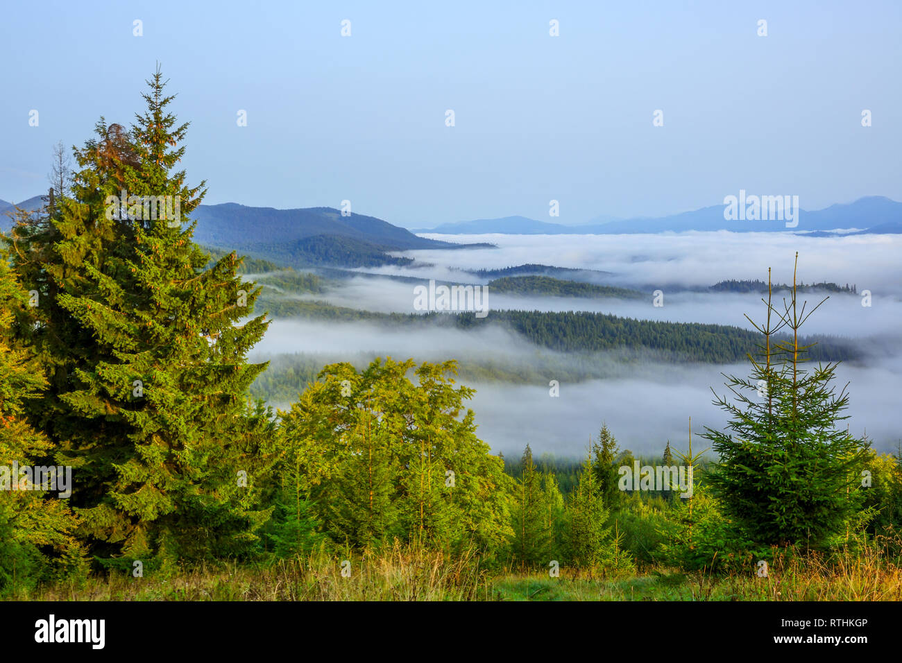 Cloudless morning over the wooded mountains. Bright green grass and spruces in the foreground. Fog in the valley - Stock Image