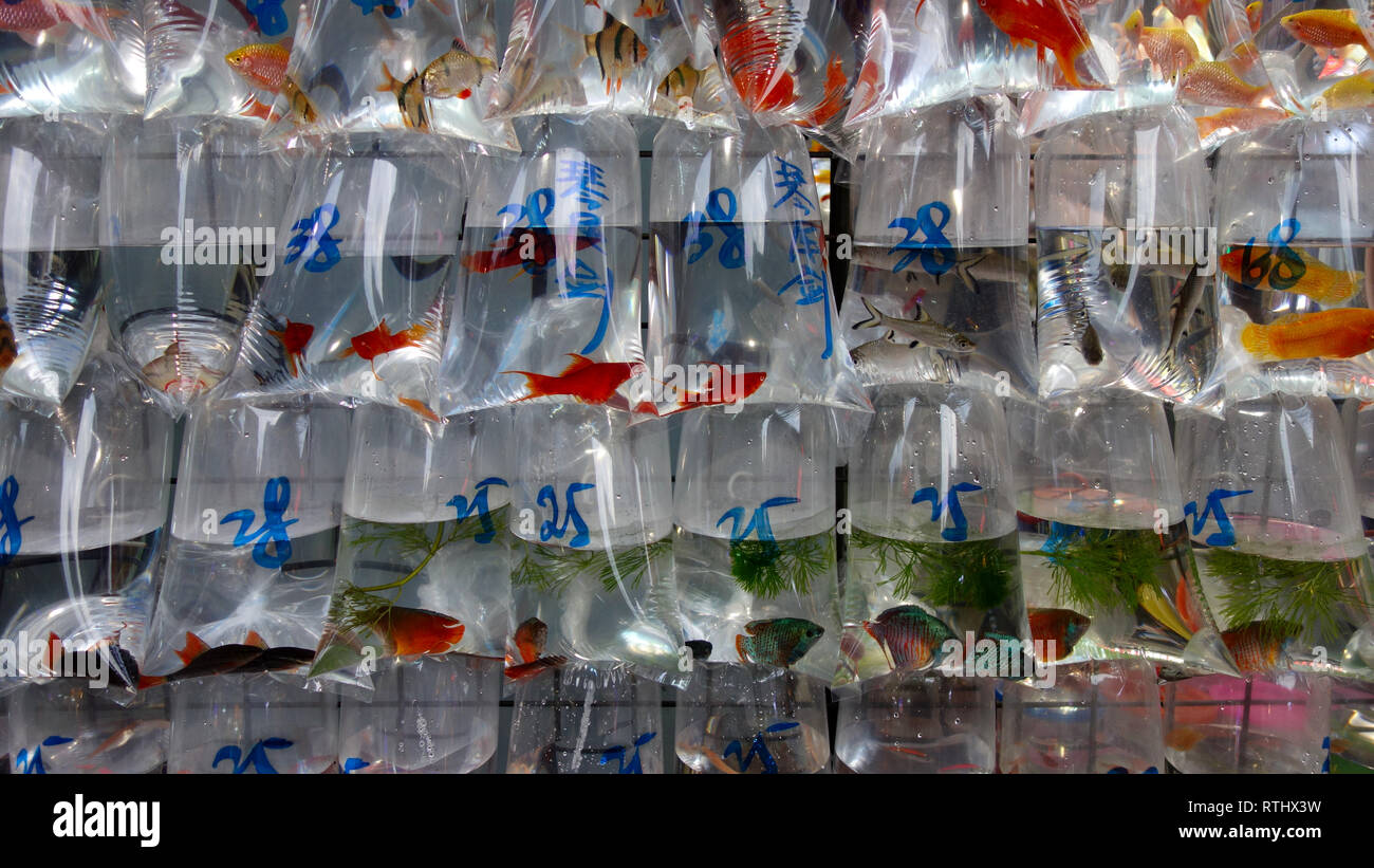 Hong Kong, Gold Fish Market - Stock Image
