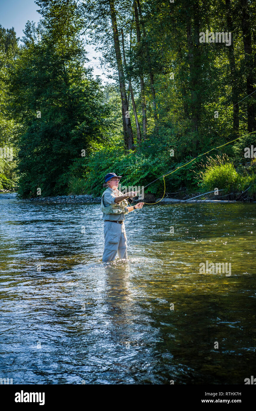 A 70 year old man fly fishing in the Cedar River, Western Washington, USA. - Stock Image