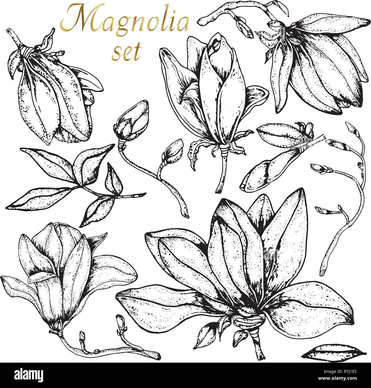 importé par Christine Hélin | Magnolia colors, Magnolia stamps ... | 1361x1300