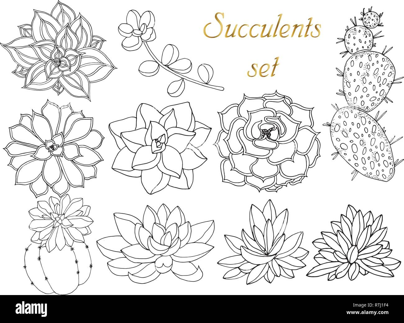 Doodle floral background in vector with doodles black and white coloring page of succulents set of tropical plants
