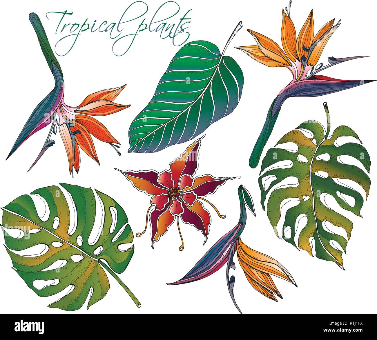 Doodle Floral Tropical Set Vector With Doodles Colorful Plants Bright Paradise Flowers With Green Banana Leaves Tropical Leaves Stock Vector Image Art Alamy Tropical party decoration supplies 8 tropical palm monstera leaves. https www alamy com doodle floral tropical set vector with doodles colorful plants bright paradise flowers with green banana leaves tropical leaves image238882894 html