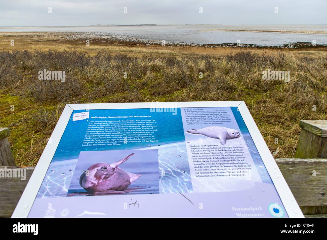 Nordseeinsel Langeoog,  Ostfriesland, Niedersachsen, Info Punkt, Aussichtsplattform am Ostende der Inseln zum Wattenmeer, mit Infotafel zu Tieren und  - Stock Image