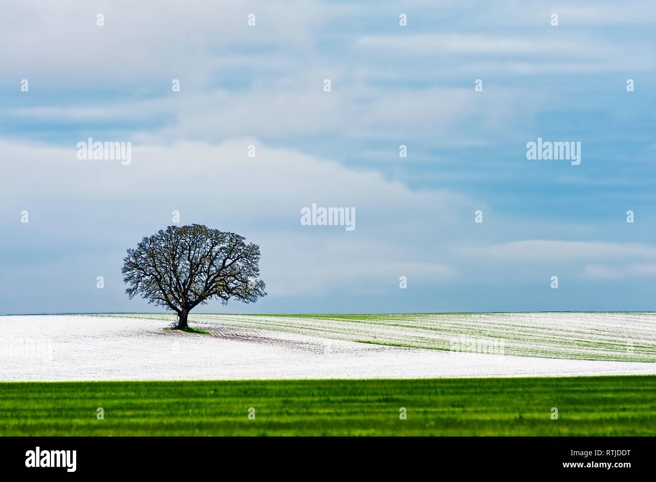 Copyspace available in the minimalist landscape of a agricultural hillside under cloudy winter skies and had laid a dusting of snow on field and a lon - Stock Image