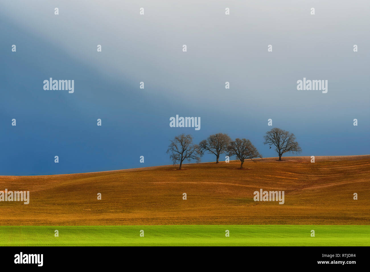 Minimalist landscape of trees on hillside under cloudy skies. Stock Photo