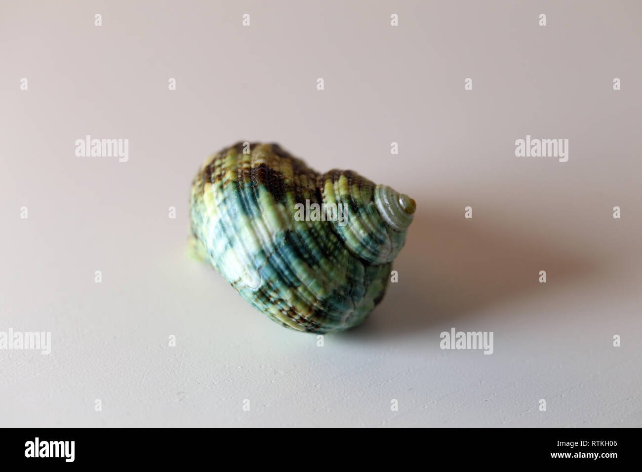 Still life photo of a beautiful green sea mollusk shell on a white table. Lovely souvenir from a vacation by the sea. Macro image with colors. - Stock Image