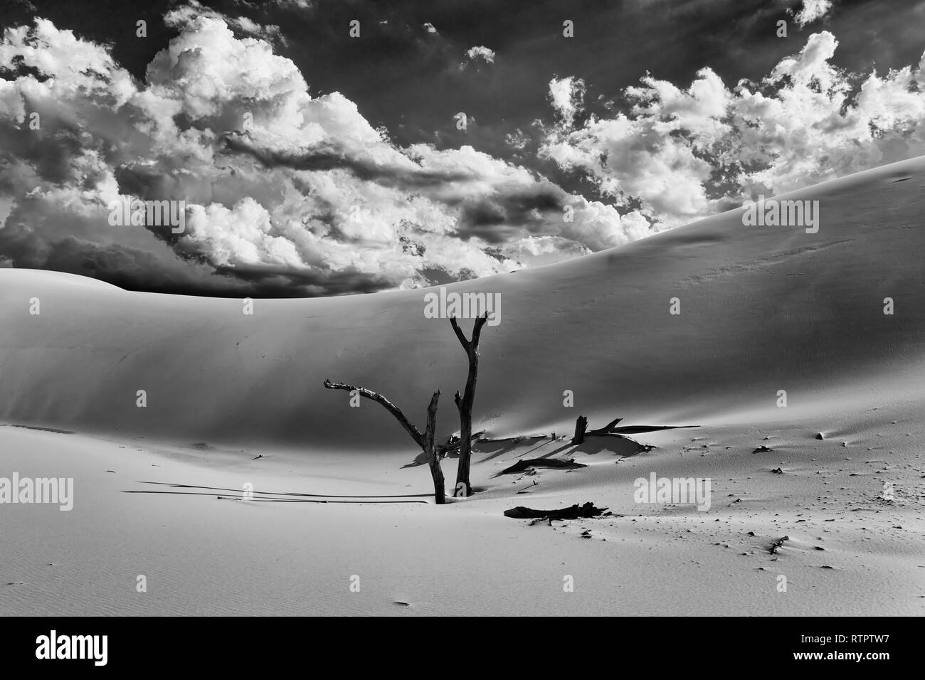 Dried lifeless tree trunks sticking out of sand against huge sand dune under hot greyscale contrast sky on a sunny summer day in Australian Stockton b - Stock Image