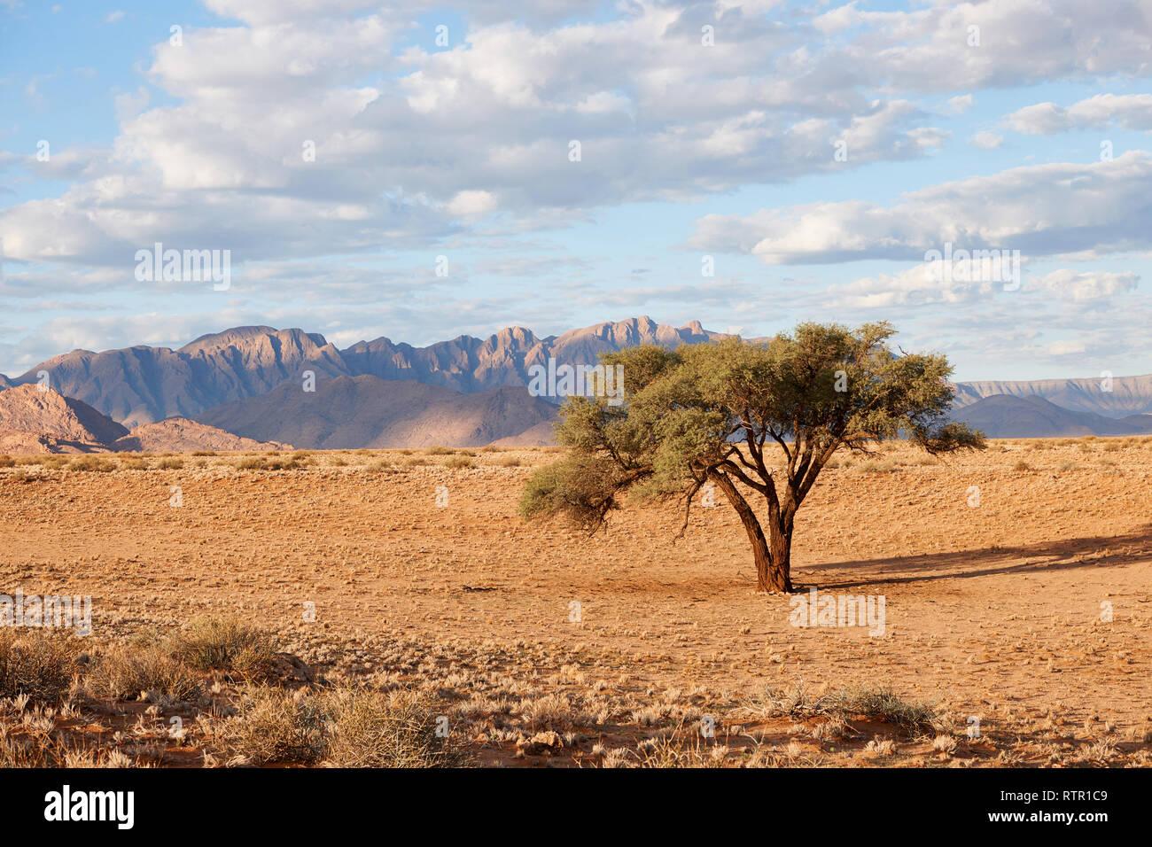 Namibian landscape with tree - Stock Image
