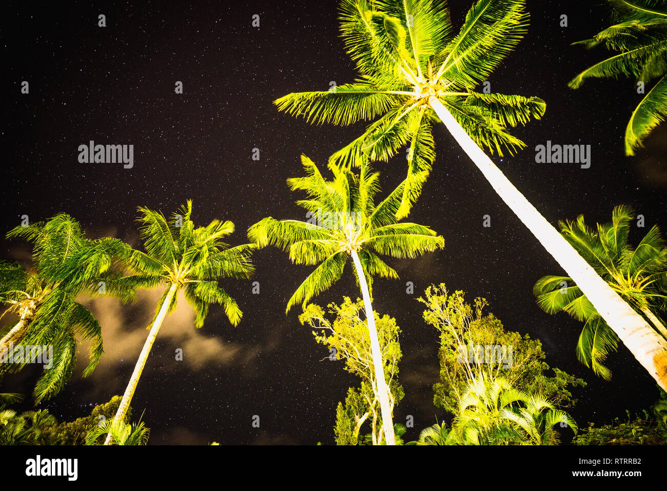 palms under the stars - Stock Image