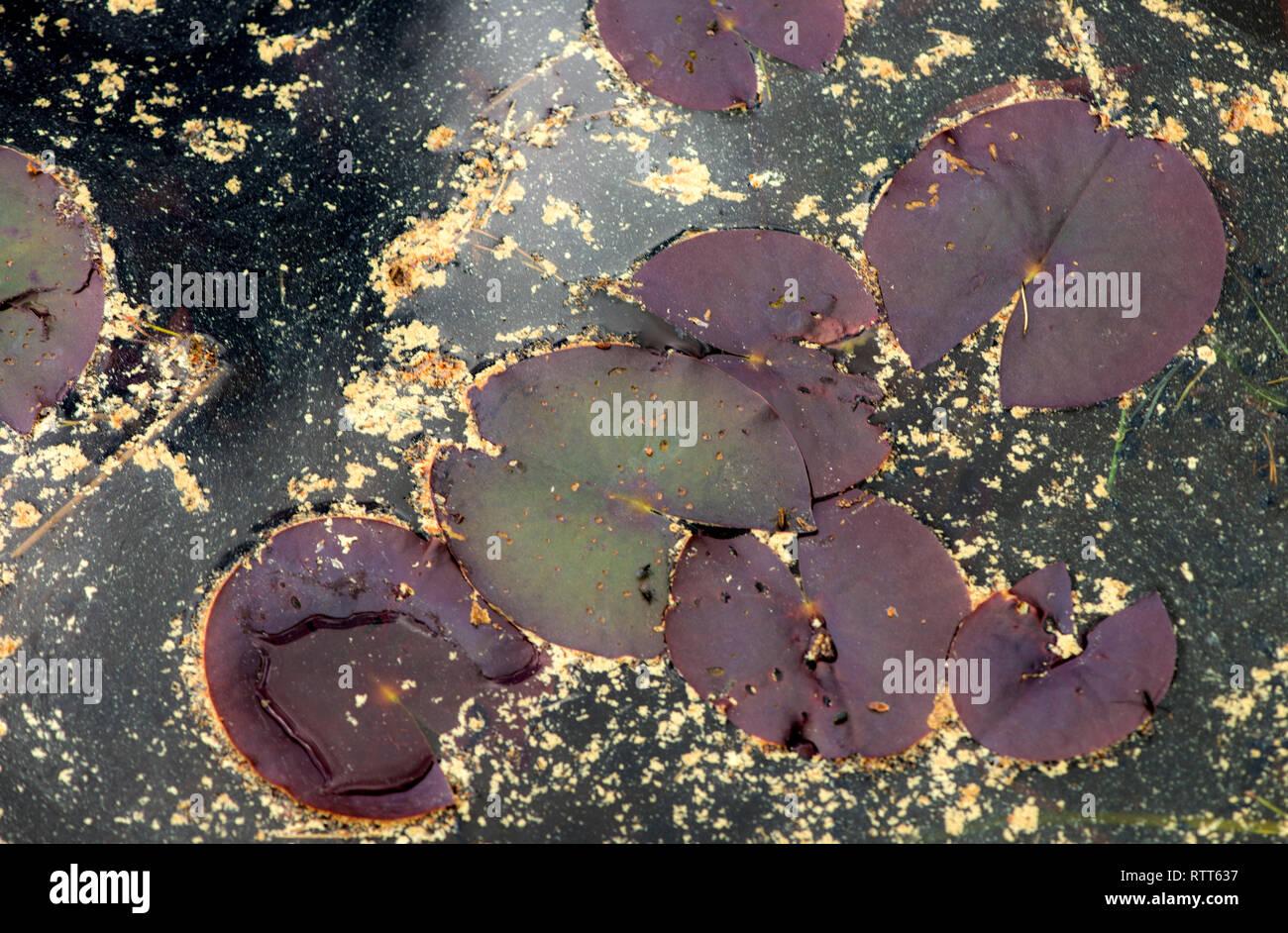 Plant, photosynthetic, eukaryotes, Plantae,  multicellular, flowering, plants, gymnosperms, ferns, Green plants, photosynthesis, chloroplasts, - Stock Image