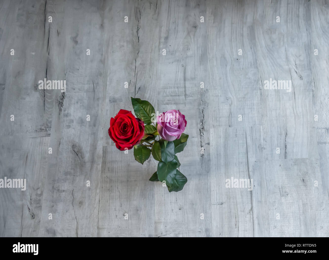 Flatbed shot of two blooming roses on a grey wooden background.  Graphic resource shot with space all around the central roses. - Stock Image