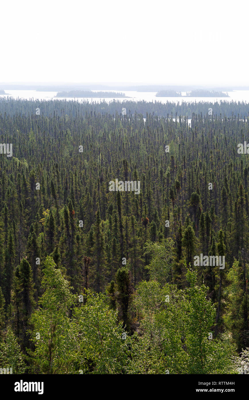 Forest seen from an esker in northern Manitoba, Canada. The esker was formed by subglacial desposits during the Ice Age - Stock Image