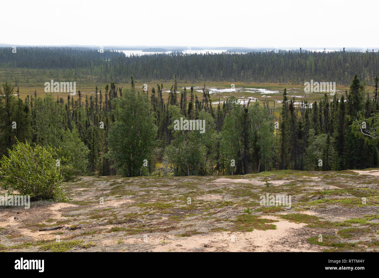 Forest seen from an esker in northern Manitoba, Canada. The esker was formed by subglacial desposits during the Ice Age. - Stock Image