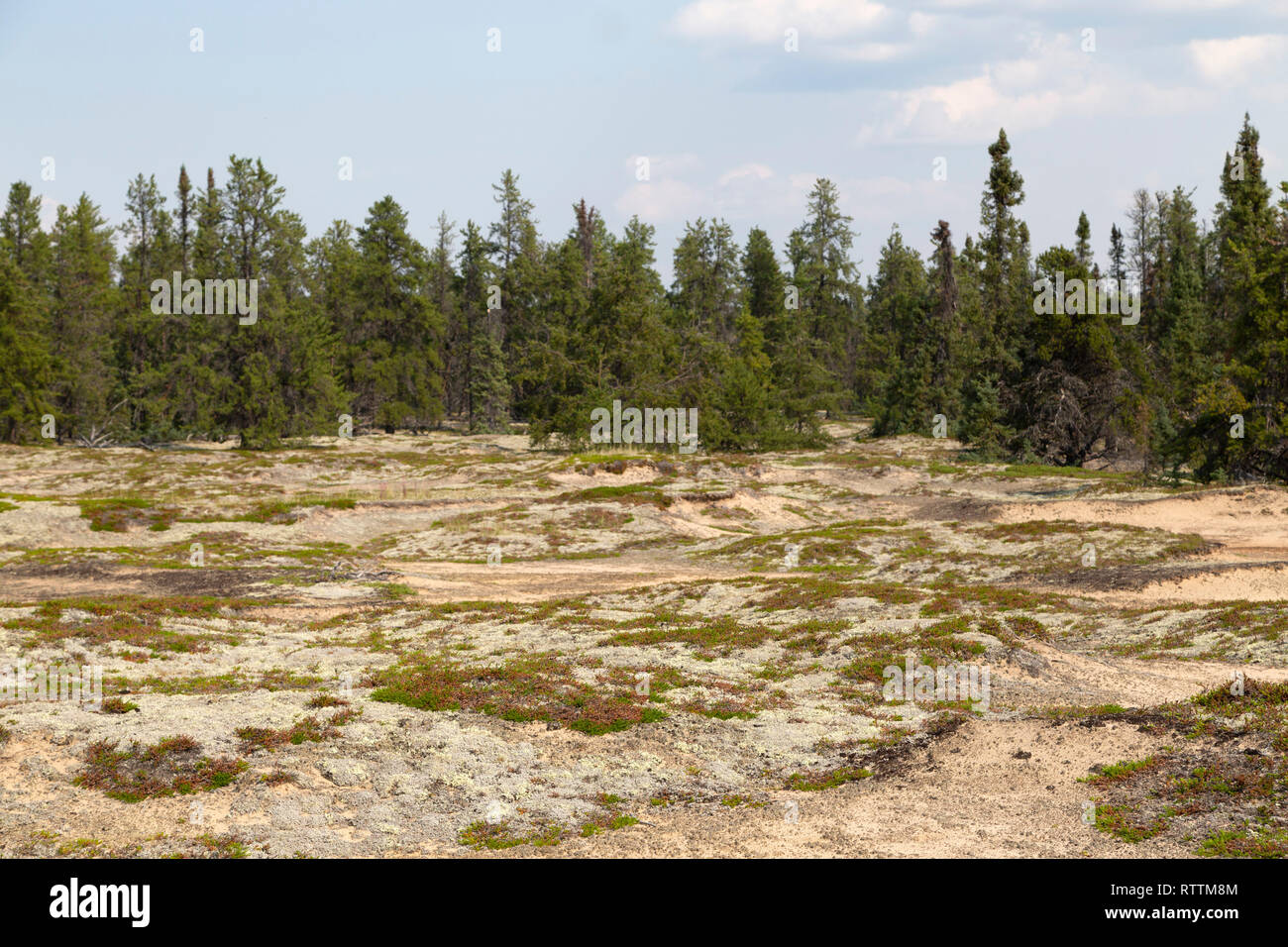Sandy ground on an esker in northern Manitoba, Canada. The esker was formed by subglacial desposits during the Ice Age. - Stock Image