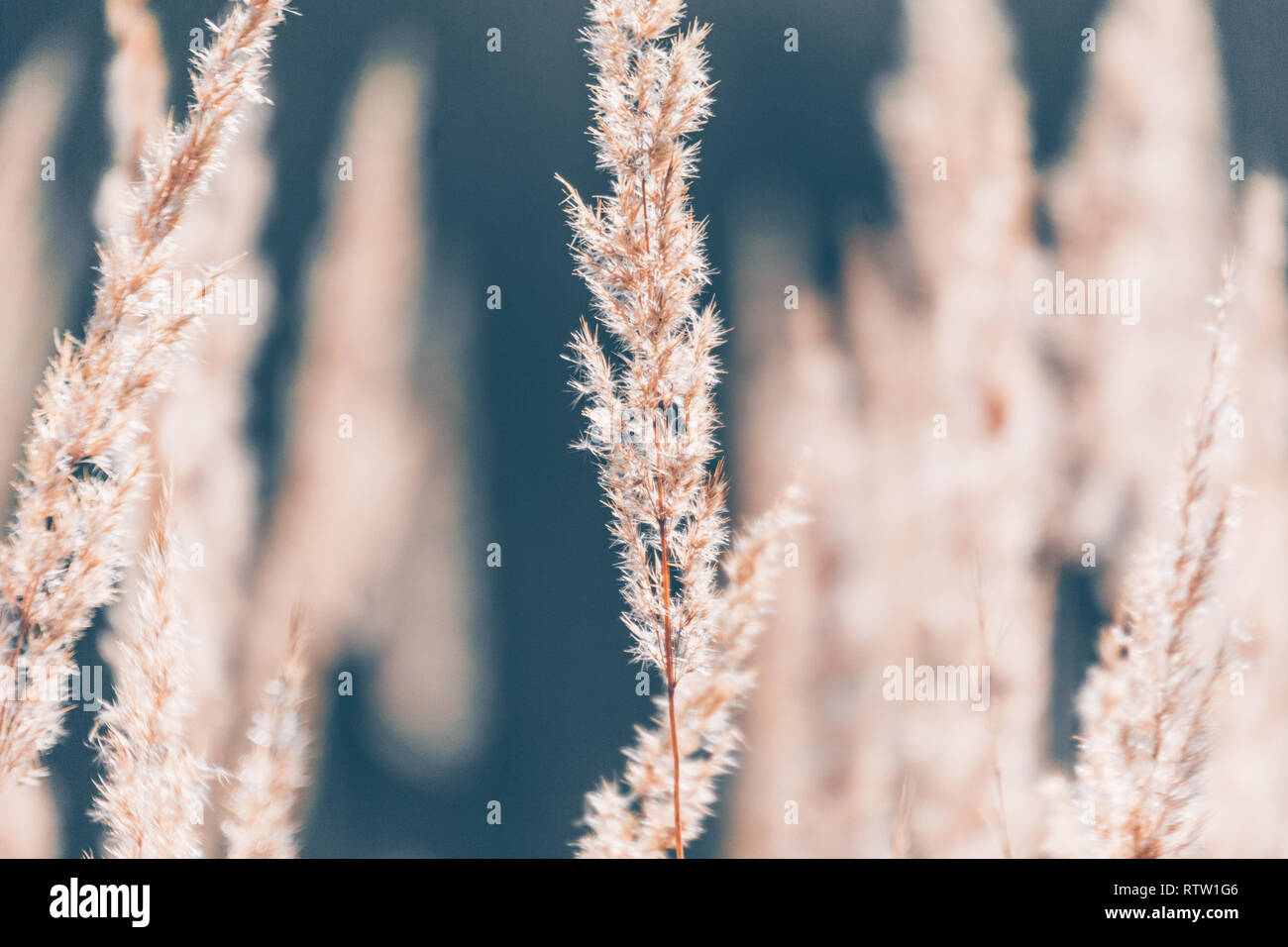 Abstraction of dry grass brown tones texture - Stock Image