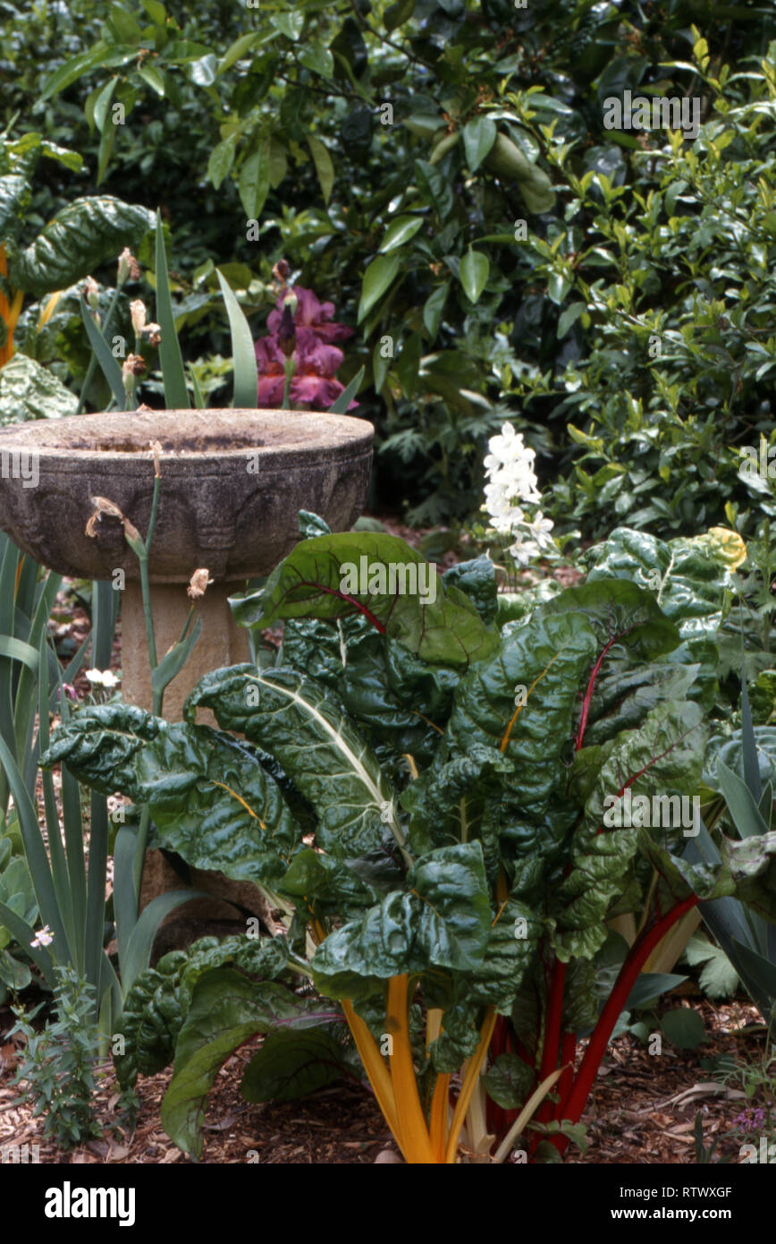 A BIRD BATH IN A VEGETABLE GARDEN FEATURING SILVER BEET GROWING. NEW SOUTH WALES, AUSTRALIA - Stock Image
