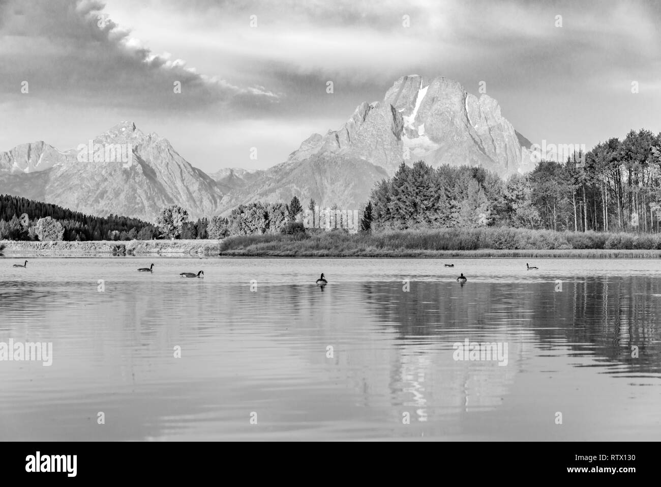 Black and white, Mount Moran reflected in Snake River, morning atmosphere at Oxbow Bend, Autumn trees and Grand Teton Range - Stock Image
