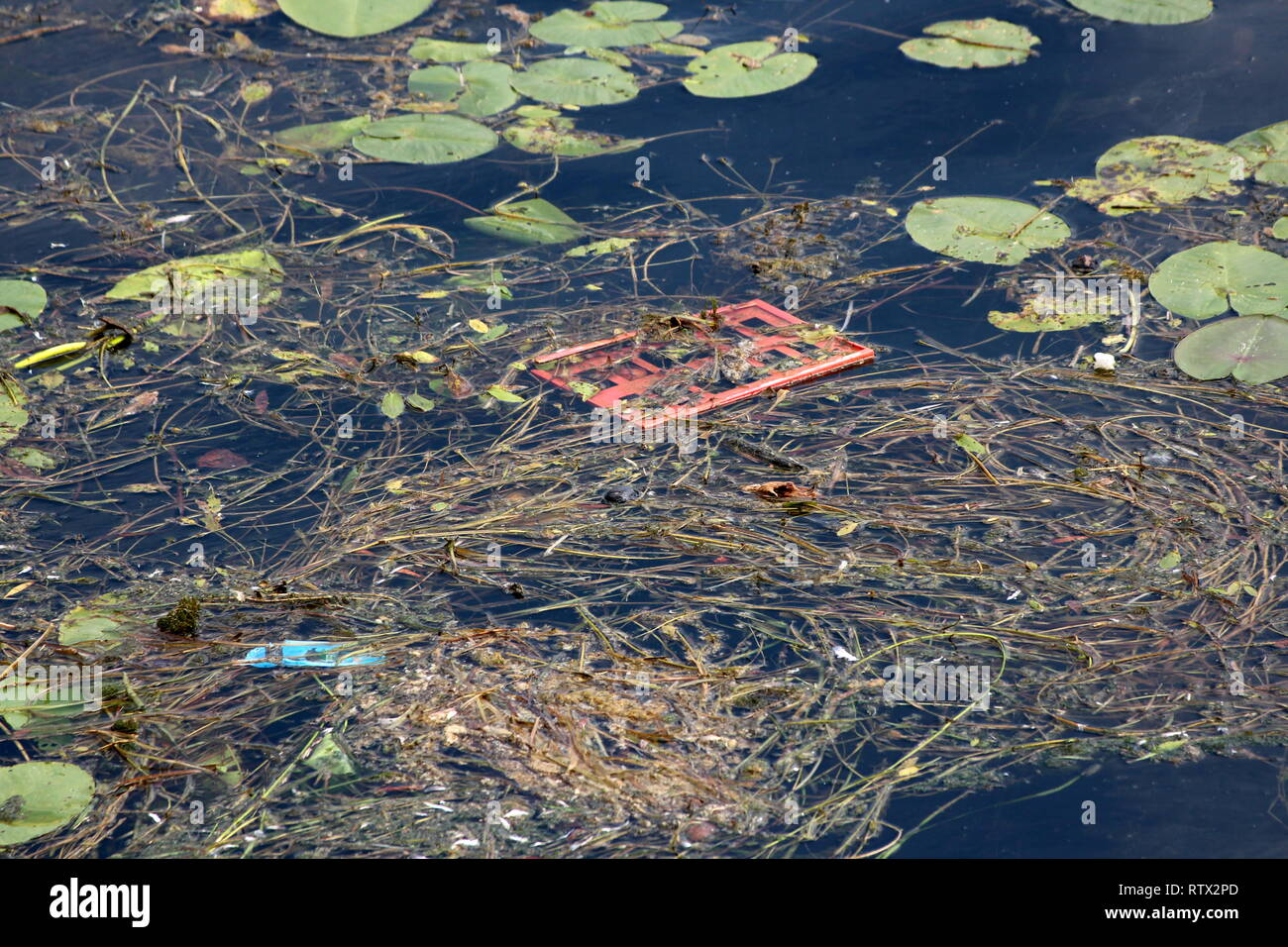 Fresh green leaves and dry fallen pine needles with branches floating mixed with garbage on calm river water on warm sunny day - Stock Image