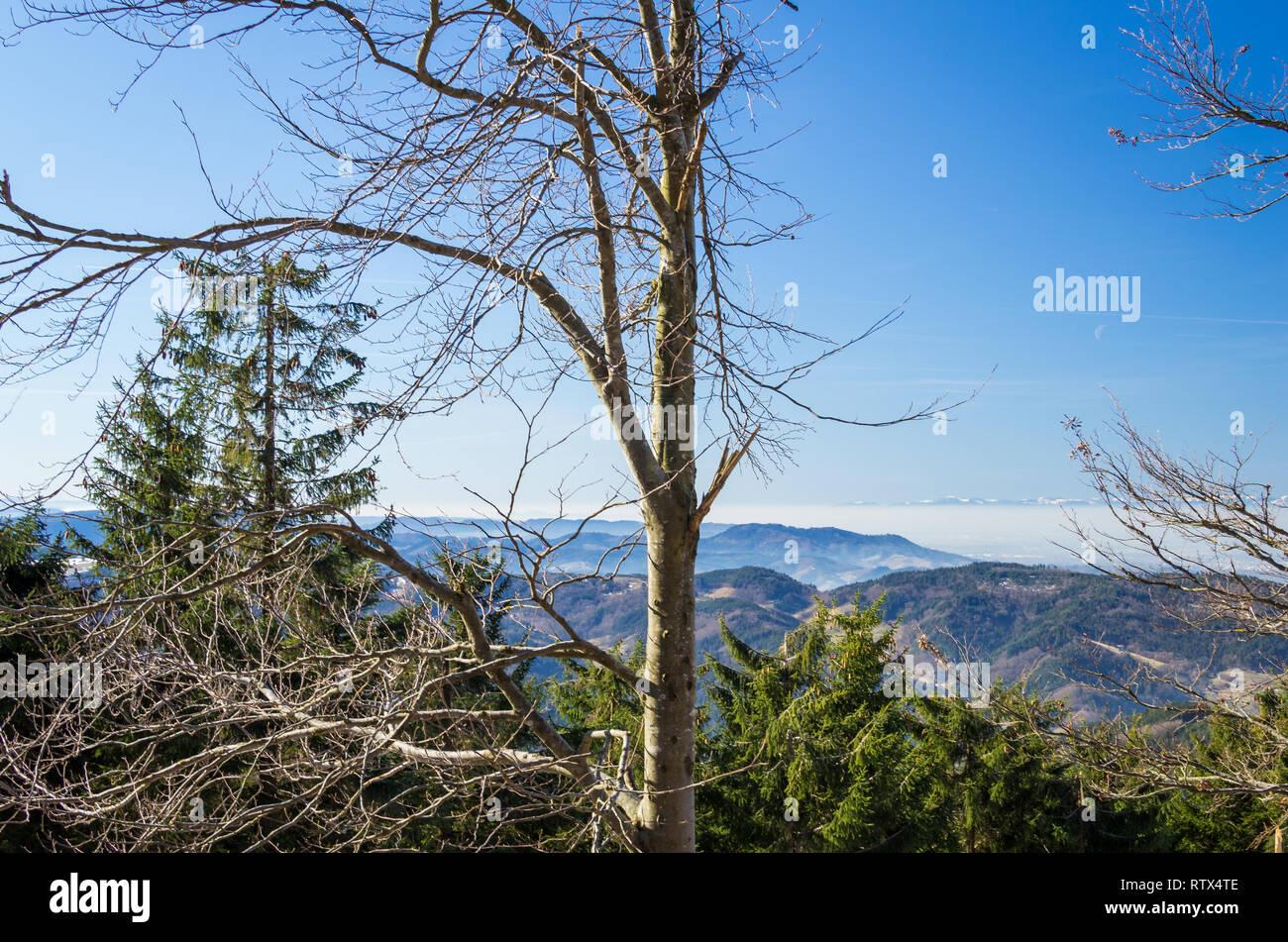 Panoramablick in das Schwarzwaldtal von der Schwarzwald-Hochstrasse - Stock Image